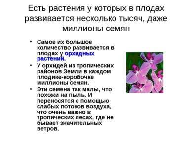 Есть растения у которых в плодах развивается несколько тысяч, даже миллионы с...