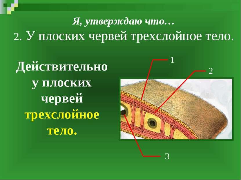 Я, утверждаю что… 2. У плоских червей трехслойное тело. Действительно у плоск...