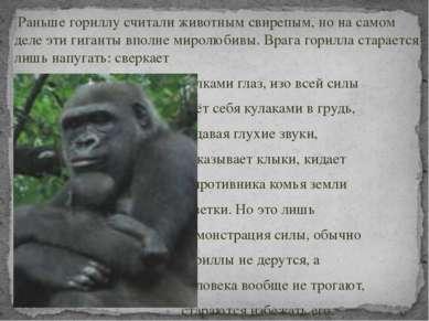 Раньше гориллу считали животным свирепым, но на самом деле эти гиганты вполне...