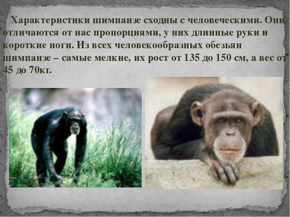 Характеристики шимпанзе сходны с человеческими. Они отличаются от нас пропорц...