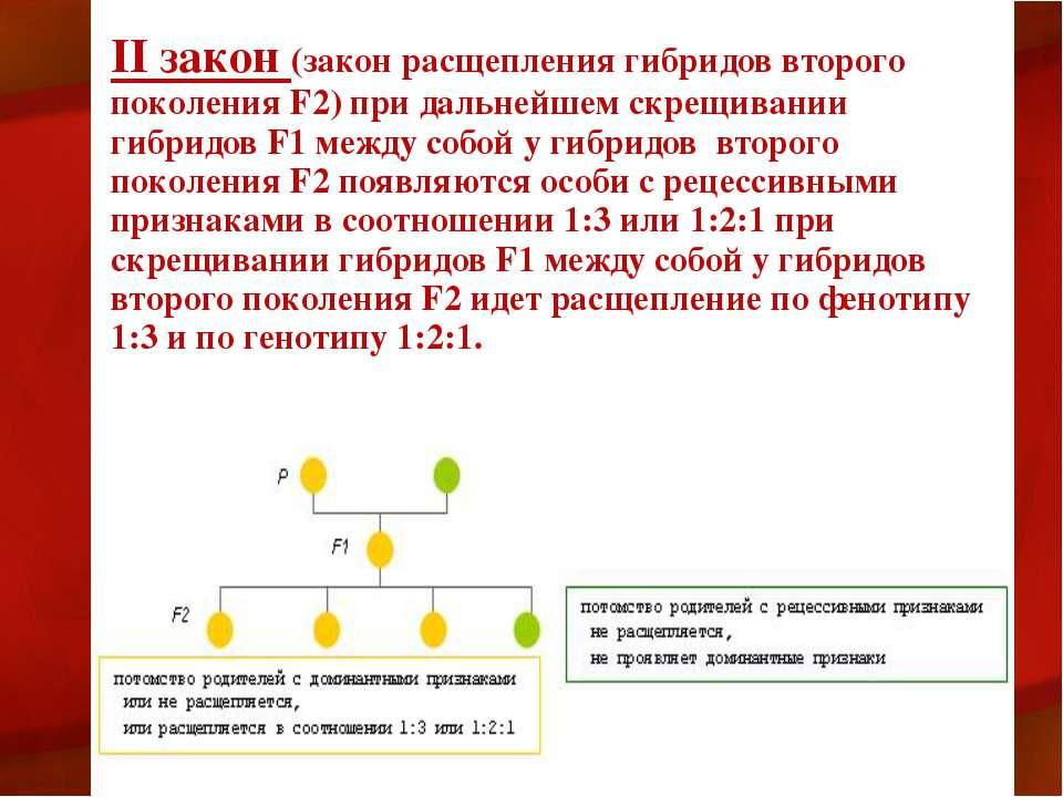 II закон (закон расщепления гибридов второго поколения F2) при дальнейшем скр...