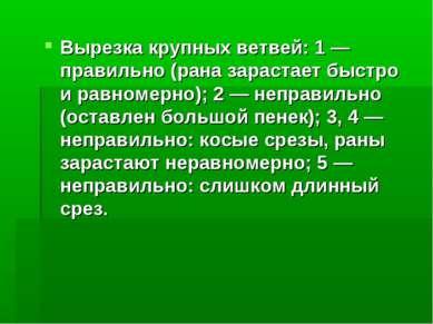 Вырезка крупных ветвей: 1 — правильно (рана зарастает быстро и равномерно); 2...