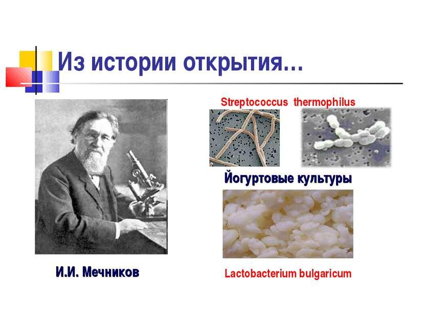 Из истории открытия… И.И. Мечников Йогуртовые культуры Streptococcus thermoph...