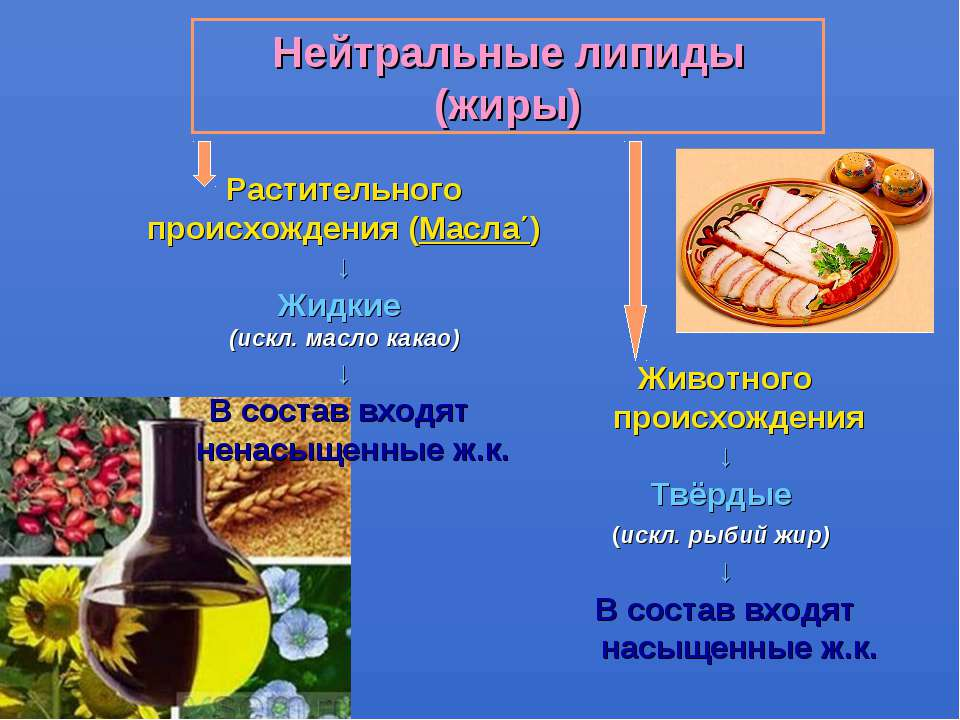 Нейтральные липиды (жиры) Растительного происхождения (Масла΄) ↓ Жидкие (искл...