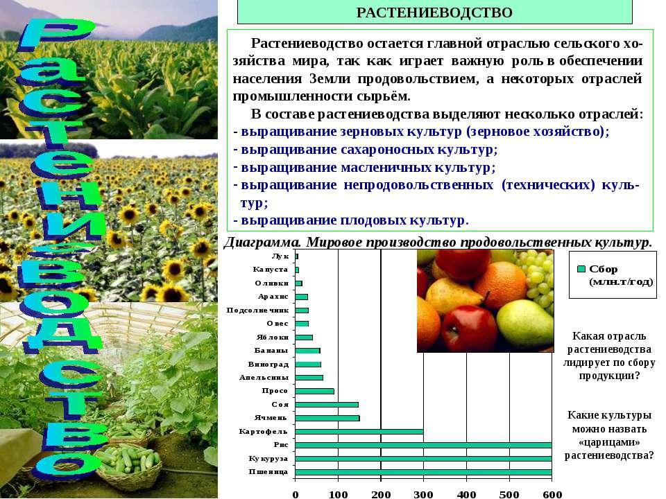 РАСТЕНИЕВОДСТВО Растениеводство остается главной отраслью сельского хо-зяйств...