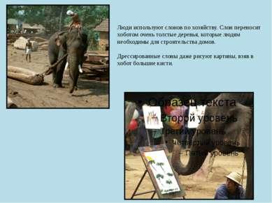 Люди используют слонов по хозяйству. Слон переносит хоботом очень толстые дер...