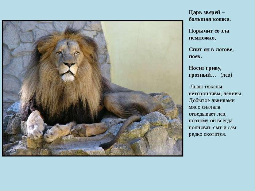 Царь зверей – большая кошка. Порычит со зла немножко, Спит он в логове, поев....