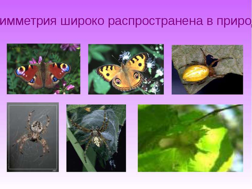 Симметрия широко распространена в природе