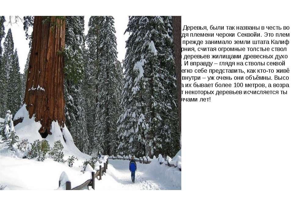Деревья, были так названы в честь вождя племени чероки Секвойи. Это племя пре...