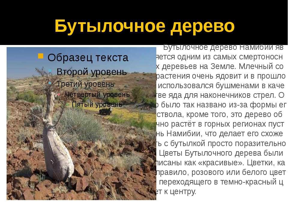 Бутылочное дерево Бутылочное дерево Намибии является одним из самых смертонос...