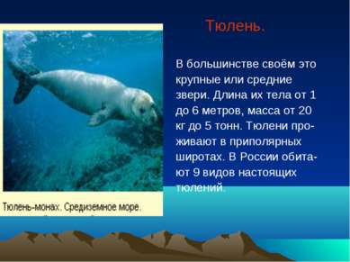 Тюлень. В большинстве своём это крупные или средние звери. Длина их тела от 1...