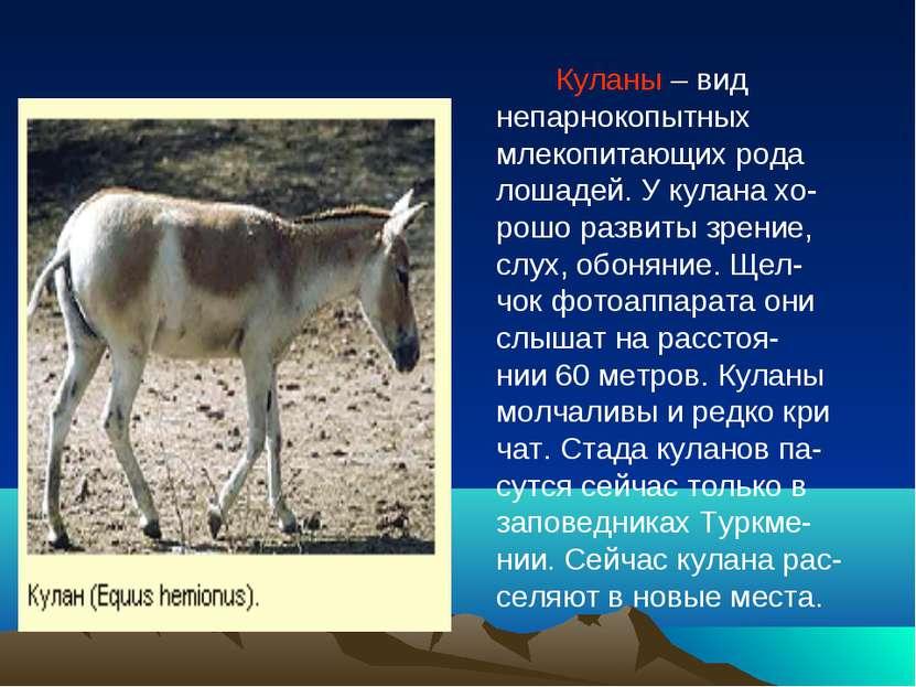 Куланы – вид непарнокопытных млекопитающих рода лошадей. У кулана хо- рошо ра...