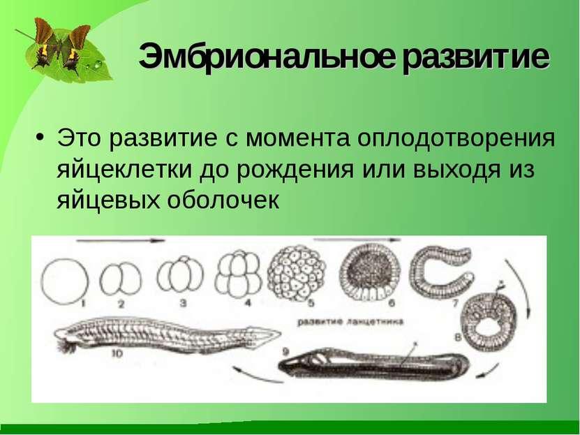 Эмбриональное развитие Это развитие с момента оплодотворения яйцеклетки до ро...