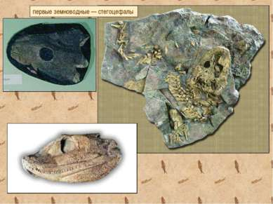 первые земноводные — стегоцефалы