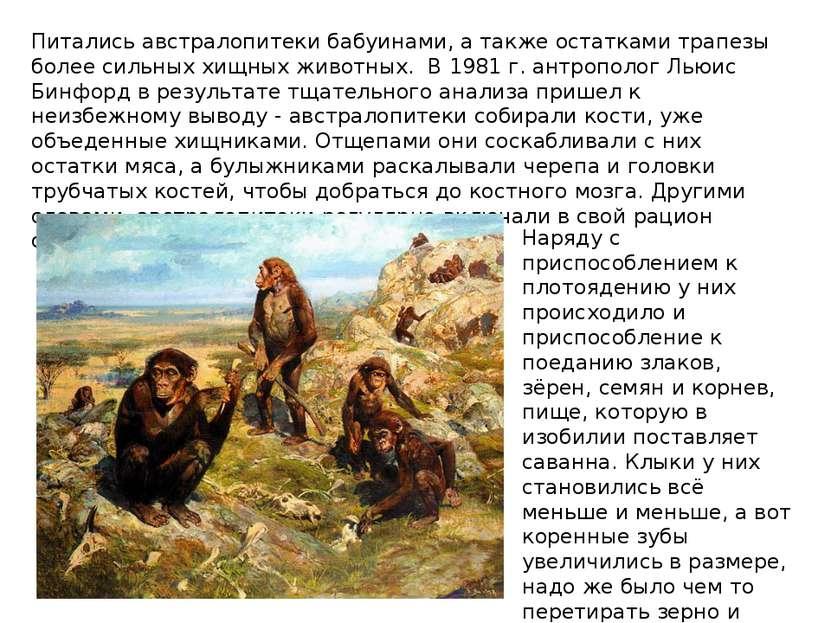 Питались австралопитеки бабуинами, а также остатками трапезы более сильных хи...