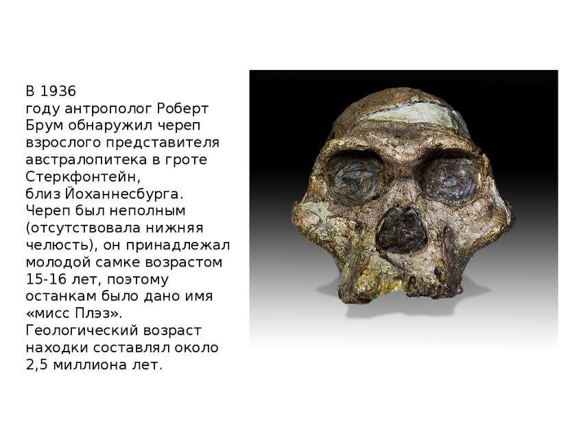 В1936 годуантропологРоберт Брумобнаружил череп взрослого представителя ав...