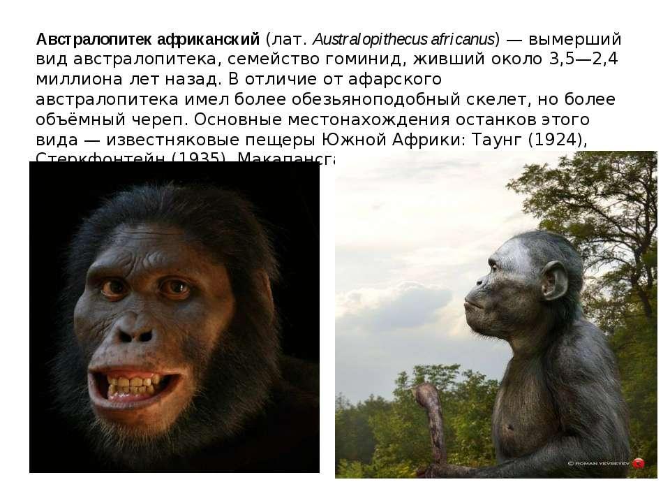 Австралопитек африканский(лат.Australopithecus africanus) — вымерший видав...