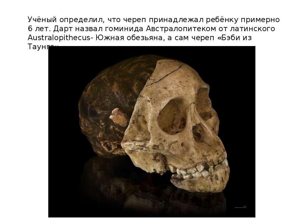 Учёный определил, что череп принадлежал ребёнку примерно 6 лет. Дарт назвал г...
