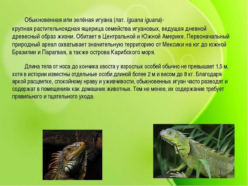 Обыкновенная или зелёная игуана (лат.Iguana iguana)- крупнаярастительноядна...