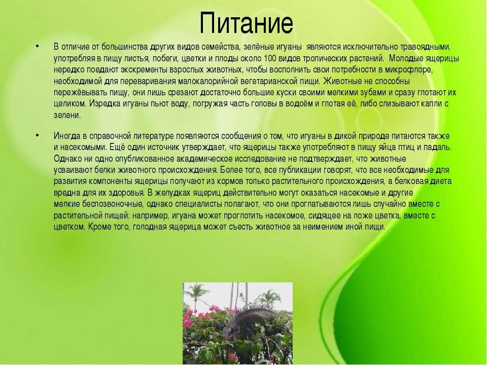 Питание В отличие от большинства других видов семейства, зелёные игуаны являю...