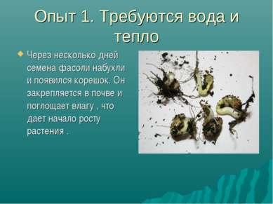 Опыт 1. Требуются вода и тепло Через несколько дней семена фасоли набухли и п...