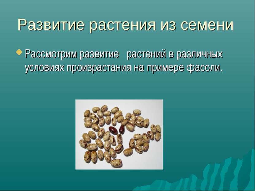 Развитие растения из семени Рассмотрим развитие растений в различных условиях...