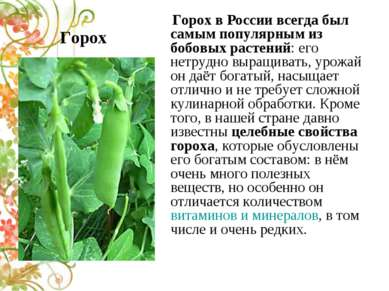 Горох Горох в России всегда был самым популярным из бобовых растений: его нет...