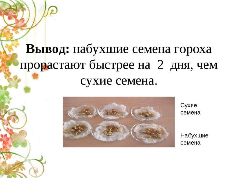 Вывод: набухшие семена гороха прорастают быстрее на 2 дня, чем сухие семена. ...