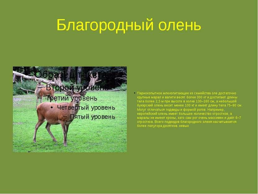 Благородный олень Парнокопытное млекопитающее из семейства оле достаточно кру...