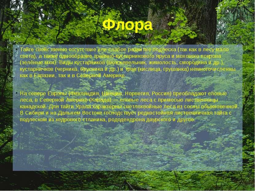 Флора Тайге свойственно отсутствие или слабое развитие подлеска (так как в ле...
