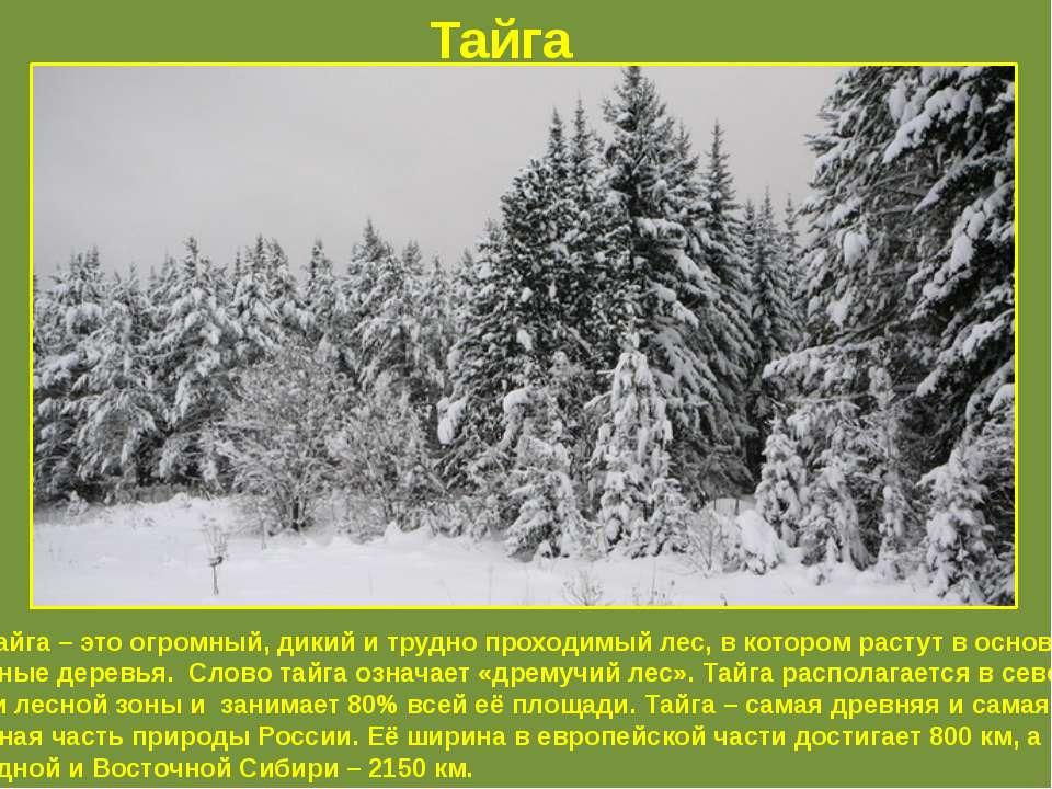 Тайга Тайга – это огромный, дикий и трудно проходимый лес, в котором растут в...