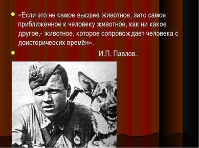 «Если это не самое высшее животное, зато самое приближенное к человеку животн...