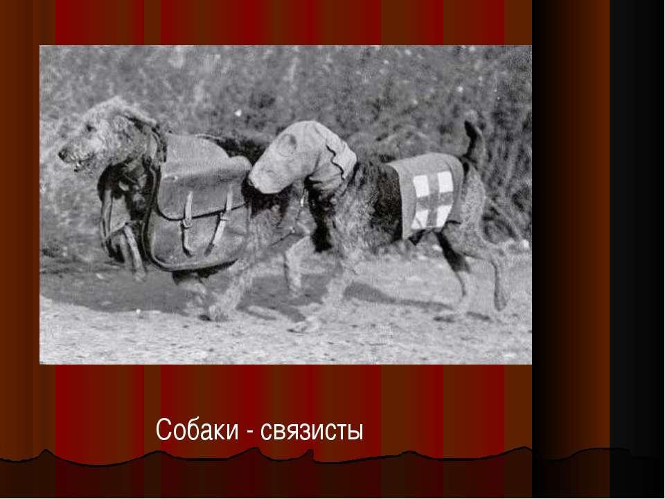 Собаки - связисты