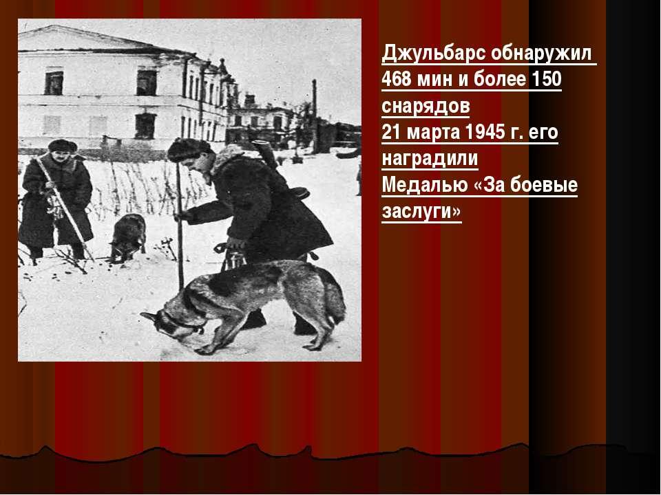 Джульбарс обнаружил 468 мин и более 150 снарядов 21 марта 1945 г. его награди...