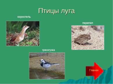 Птицы луга Главная перепел коростель трясогузка