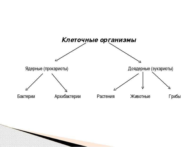 Клеточные организмы Ядерные (прокариоты) Доядерные(эукариоты) Бактерии Архиба...