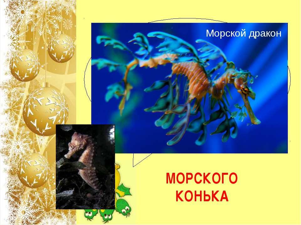 Родственником какой рыбы является морской дракон или морской пегас, обитающий...