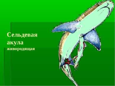Сельдевая акула живородящая