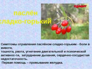 паслён сладко-горький Симптомы отравления паслёном сладко-горьким - боли в жи...