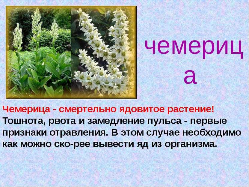 чемерица Чемерица - смертельно ядовитое растение! Тошнота, рвота и замедление...