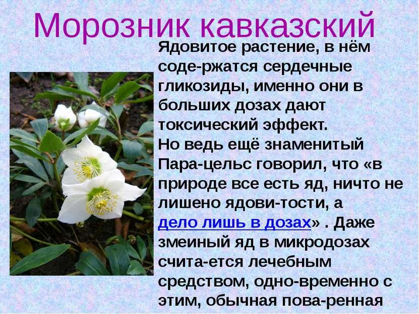 Ядовитое растение, в нём соде-ржатся сердечные гликозиды, именно они в больши...