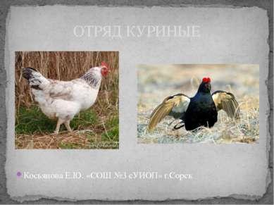Косьянова Е.Ю. «СОШ №3 сУИОП» г.Сорск ОТРЯД КУРИНЫЕ