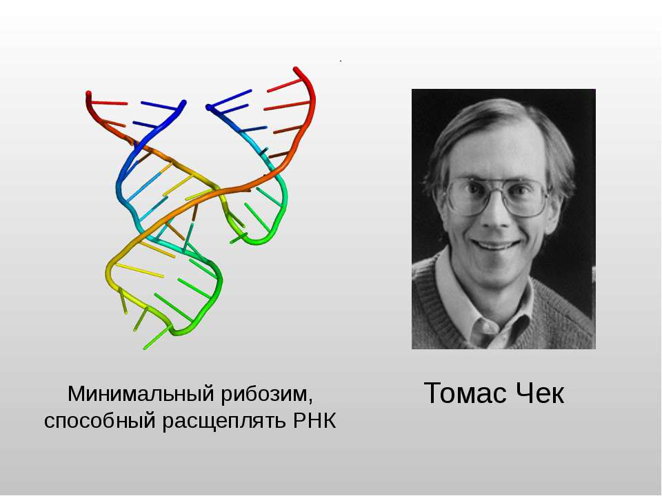 Минимальный рибозим, способный расщеплять РНК Томас Чек Адрес картинки http:/...