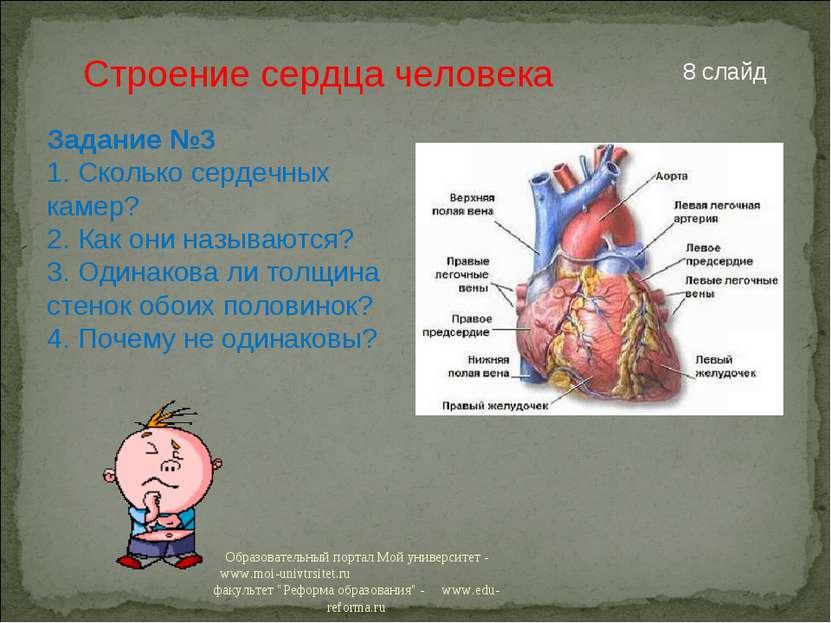 Строение сердца человека Задание №3 1. Сколько сердечных камер? 2. Как они на...