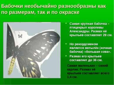 Бабочки необычайно разнообразны как по размерам, так и по окраске Самая крупн...