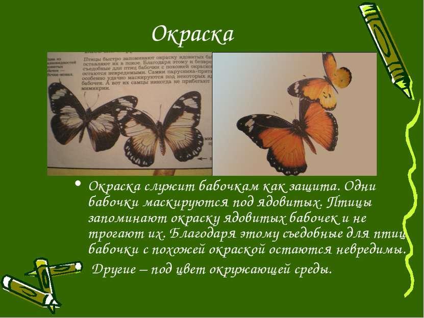 Окраска Окраска служит бабочкам как защита. Одни бабочки маскируются под ядов...