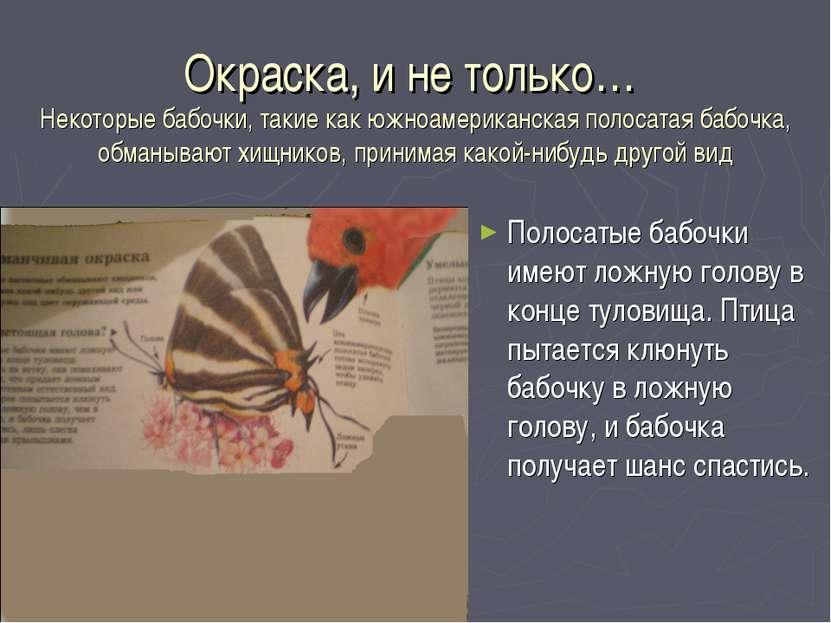 Окраска, и не только… Некоторые бабочки, такие как южноамериканская полосатая...