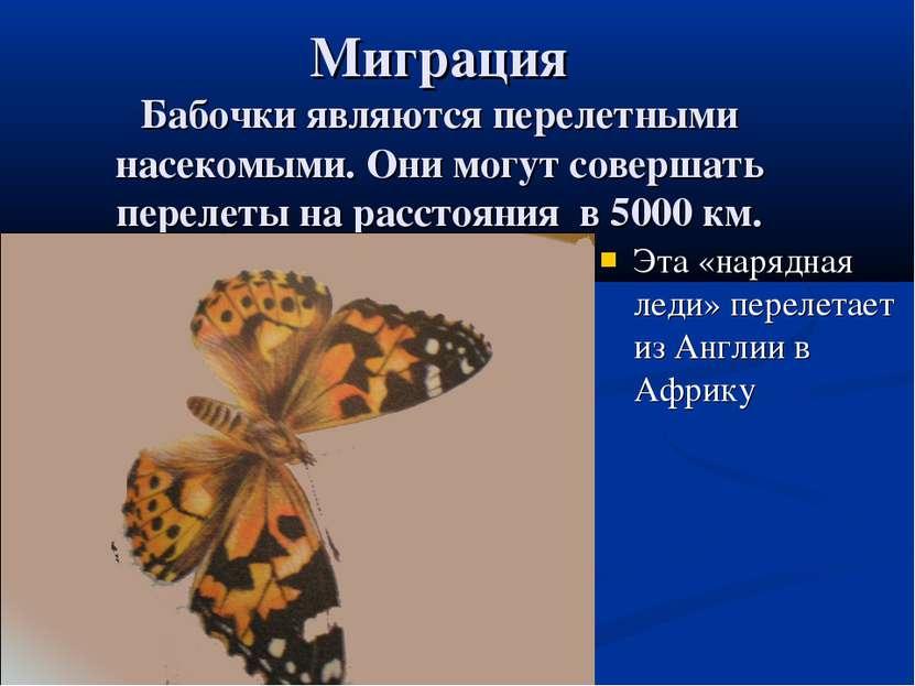 Миграция Бабочки являются перелетными насекомыми. Они могут совершать перелет...