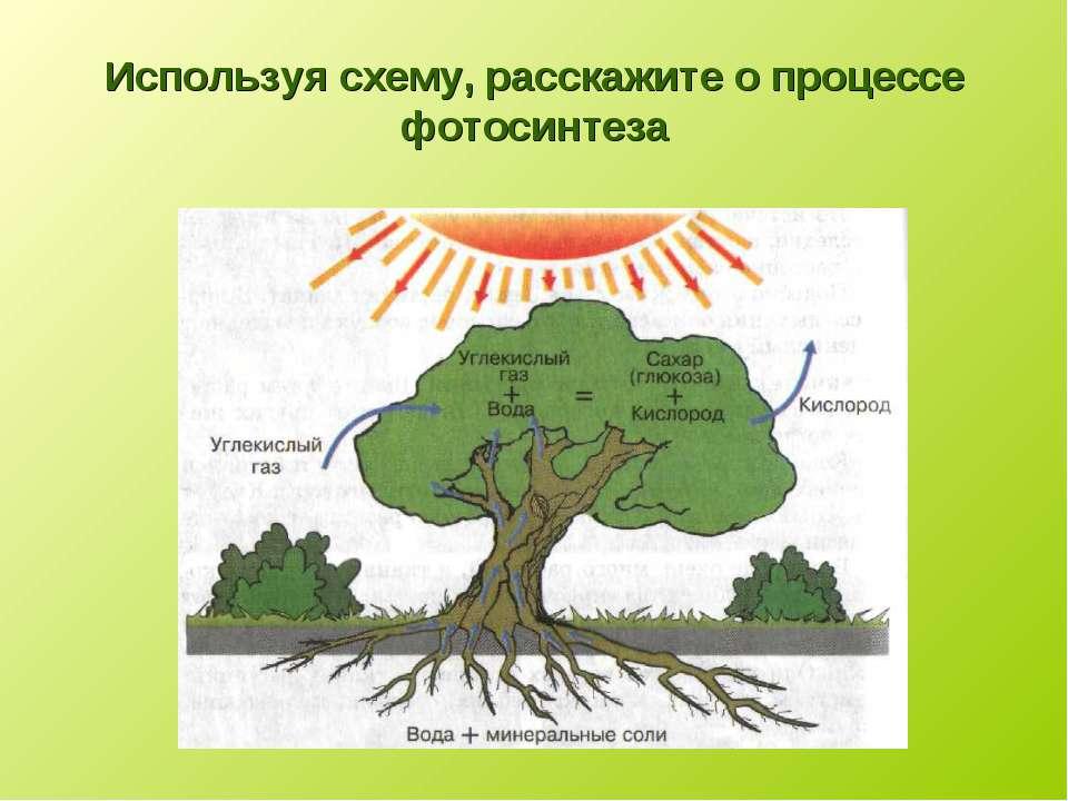 Используя схему, расскажите о процессе фотосинтеза