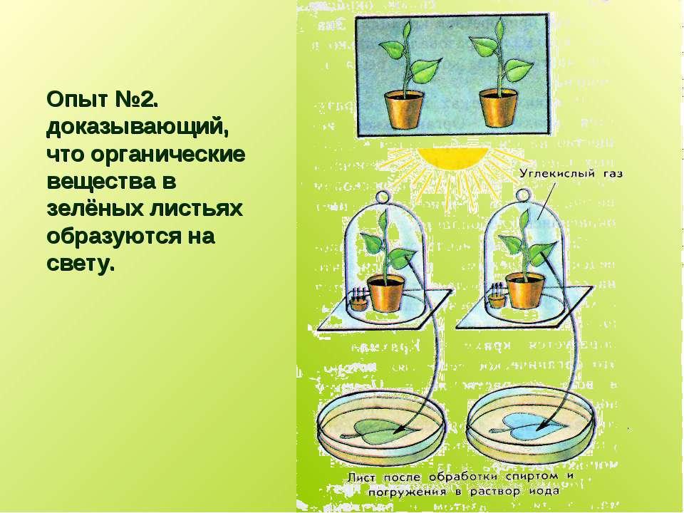 Опыт №2. доказывающий, что органические вещества в зелёных листьях образуются...